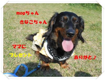 Mog_031