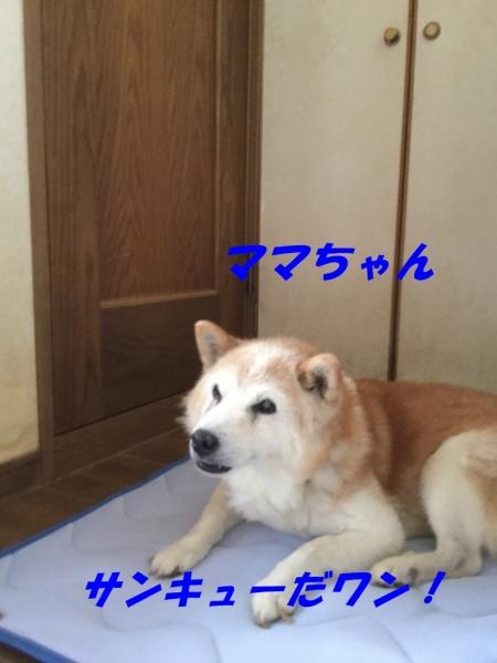 Img_2245-768x1024